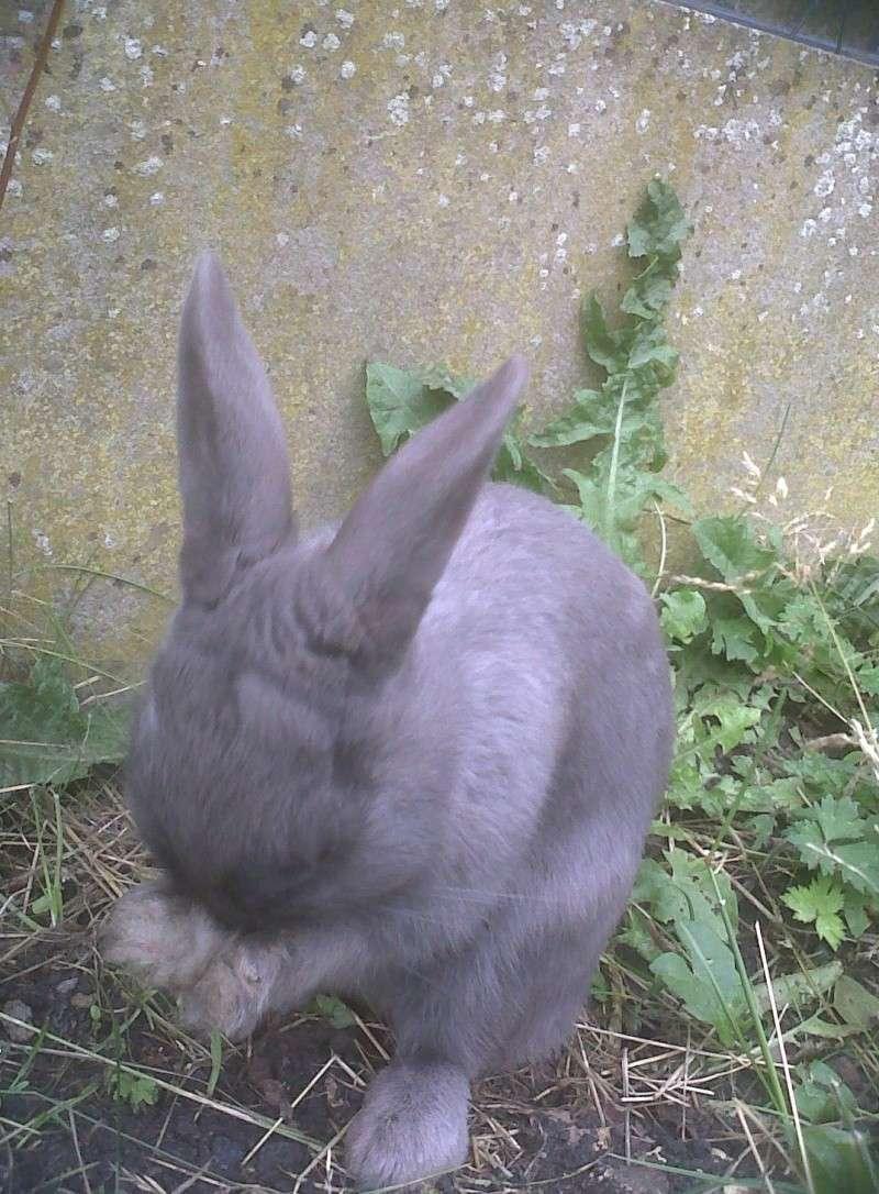 Flappie, née en novembre 2010 - Page 2 Bouh10
