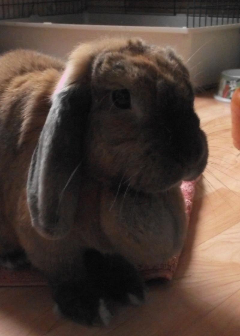 Kallie, lapine bélier née en 2008 - Page 5 Dscf4410