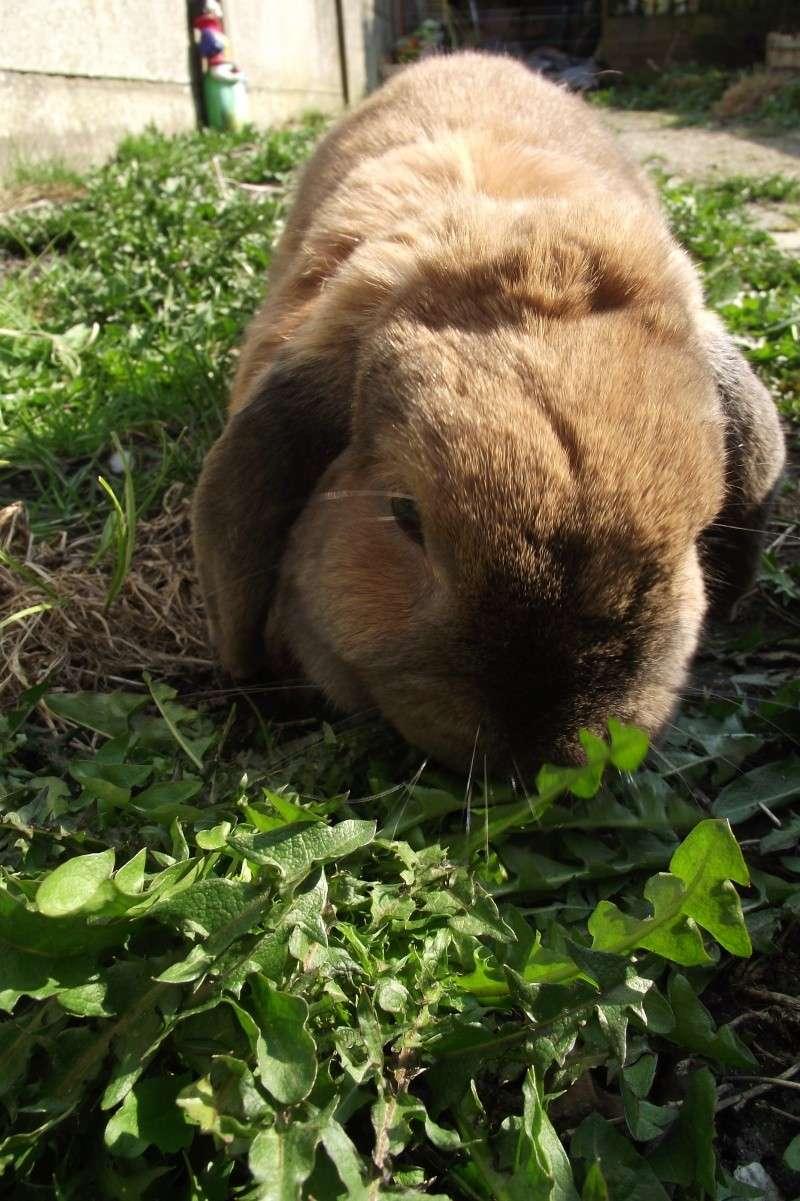 Kallie, lapine bélier née en 2008 - Page 5 Dscf7811