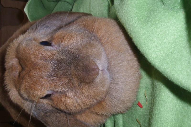 Kallie, lapine bélier née en 2008 Dsci0010