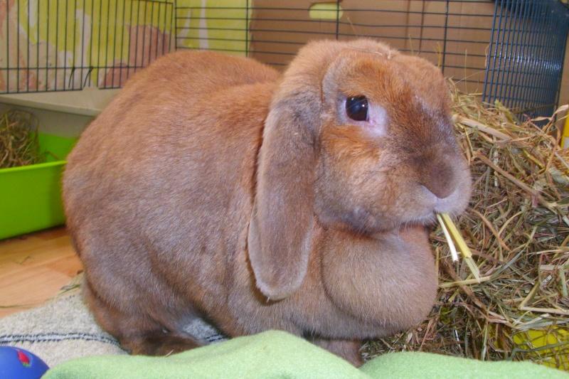 Kallie, lapine bélier née en 2008 Dsci0012