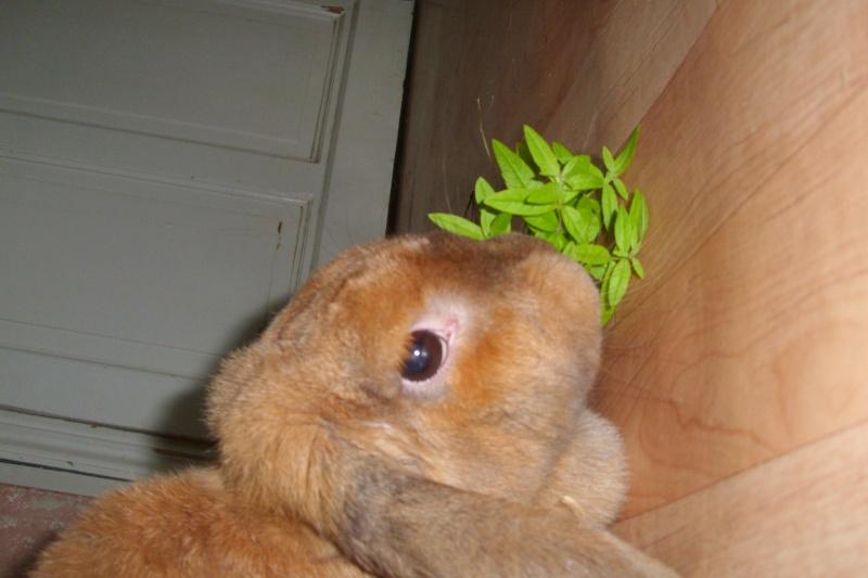 Kallie, lapine bélier née en 2008 - Page 2 Dsci0110