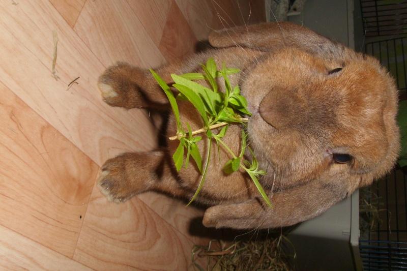 Kallie, lapine bélier née en 2008 - Page 2 Dsci0111