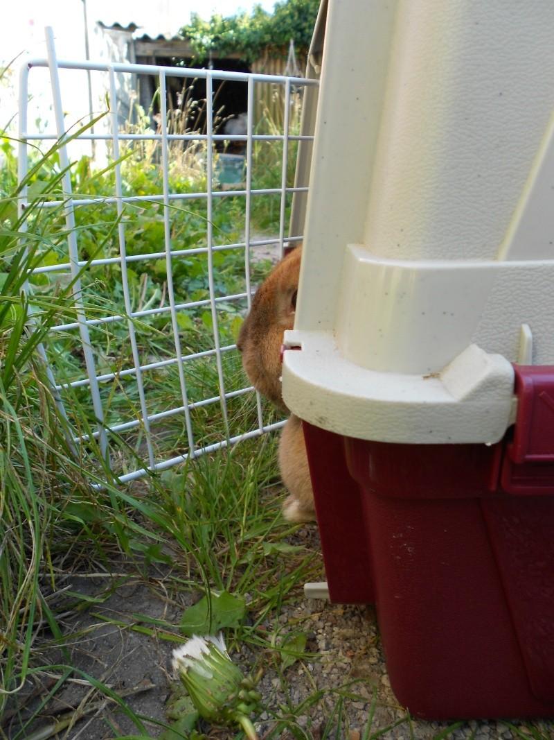 Kallie, lapine bélier née en 2008 - Page 2 Dscn0010