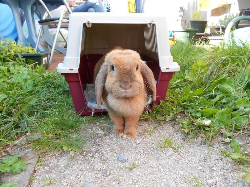 Kallie, lapine bélier née en 2008 - Page 2 Dscn0011