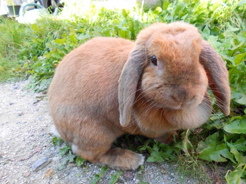 Kallie, lapine bélier née en 2008 - Page 2 Dscn0110