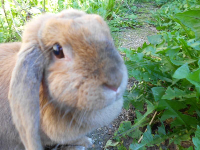 Kallie, lapine bélier née en 2008 - Page 2 Dscn0111