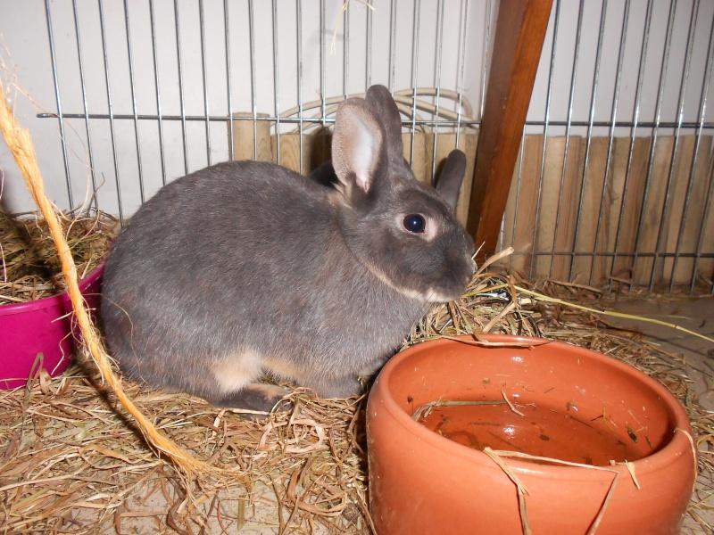Gloupie, née en novembre 2010 - Page 3 Dscn0412