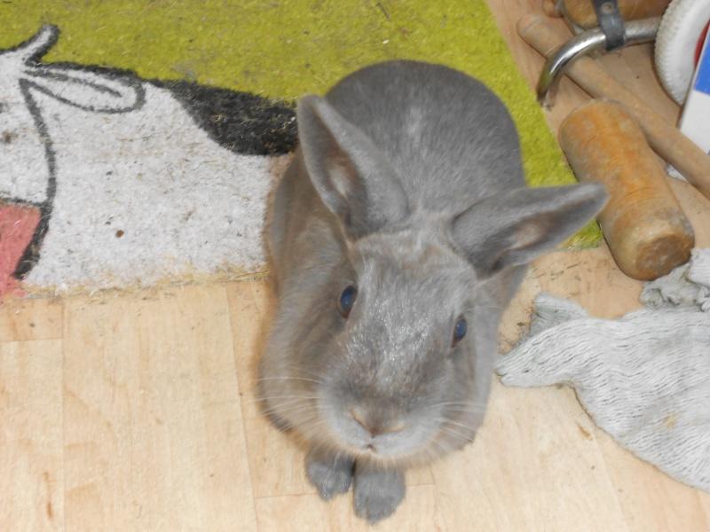 Flappie, née en novembre 2010 - Page 3 Dscn0514
