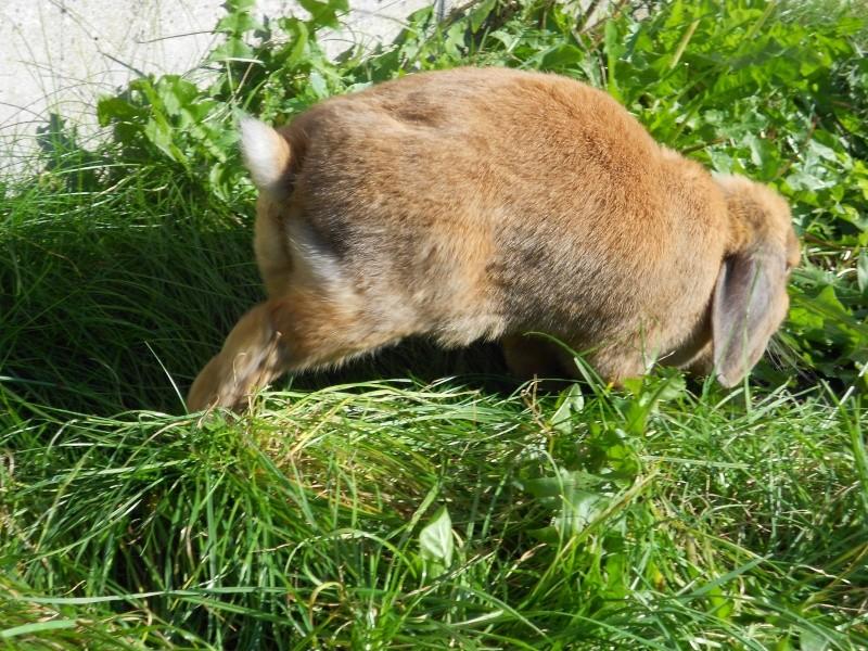 Kallie, lapine bélier née en 2008 - Page 3 Dscn0516