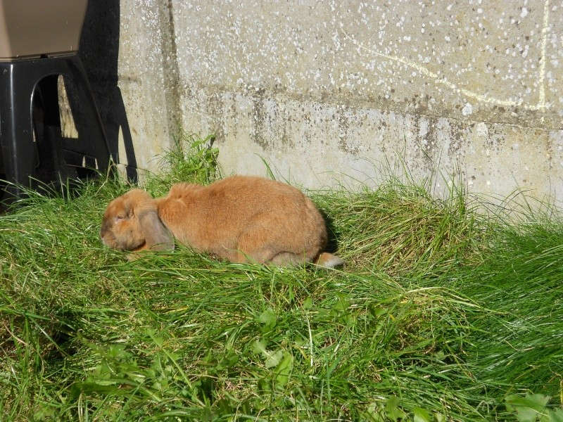 Kallie, lapine bélier née en 2008 - Page 3 Dscn0517