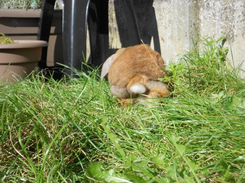 Kallie, lapine bélier née en 2008 - Page 3 Dscn0518