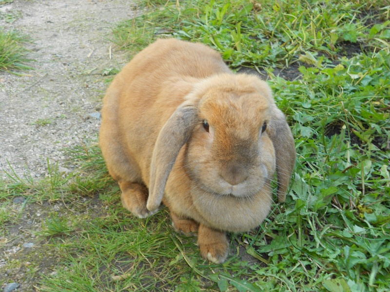 Kallie, lapine bélier née en 2008 - Page 3 Dscn0519