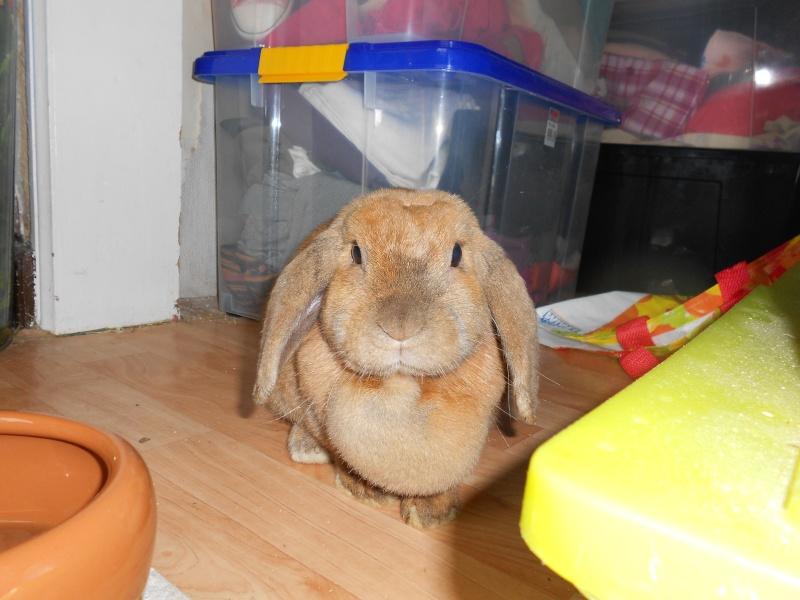Kallie, lapine bélier née en 2008 - Page 3 Dscn0714