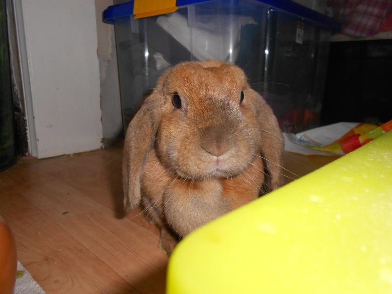 Kallie, lapine bélier née en 2008 - Page 3 Dscn0715