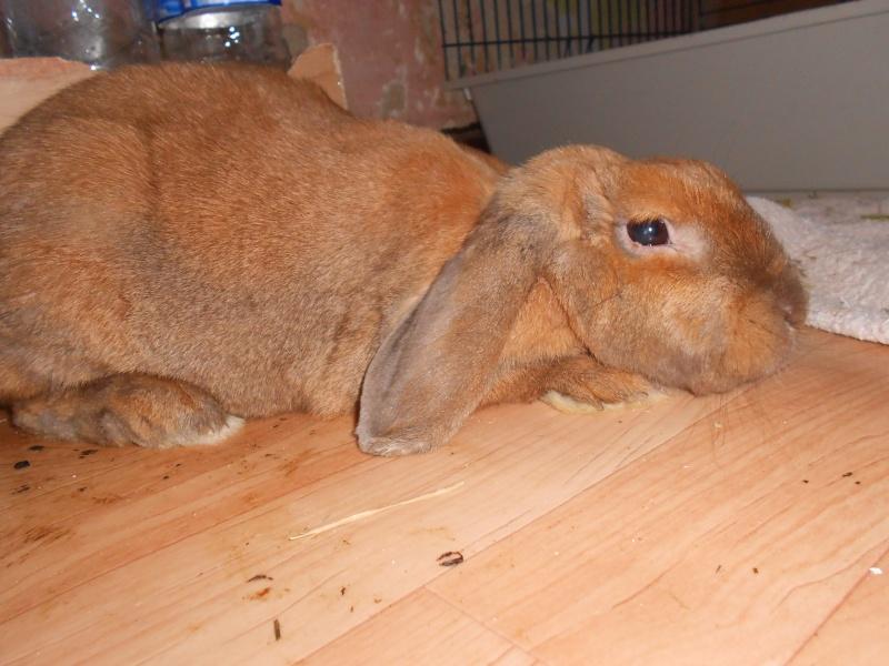 Kallie, lapine bélier née en 2008 - Page 3 Dscn0717