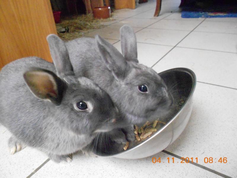 Gloupie, née en novembre 2010 - Page 3 Dscn1419