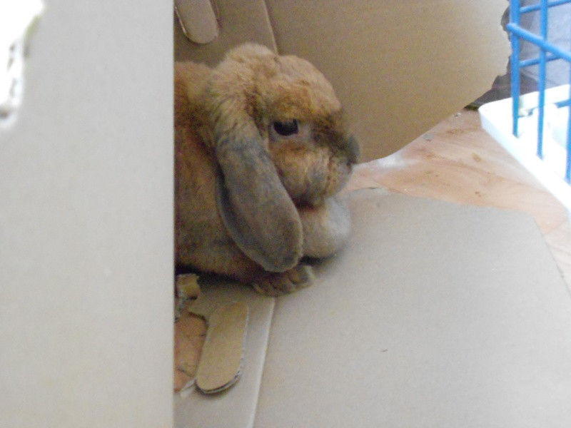 Kallie, lapine bélier née en 2008 - Page 3 Dscn1421