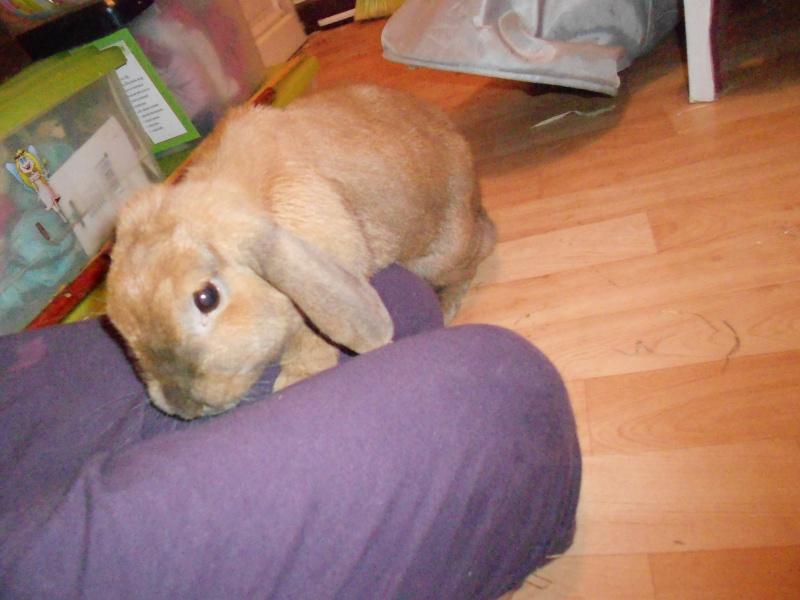 Kallie, lapine bélier née en 2008 - Page 3 Dscn1712