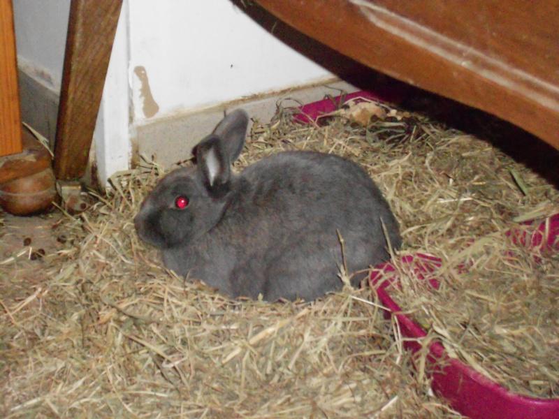 Flappie, née en novembre 2010 - Page 5 Dscn1811