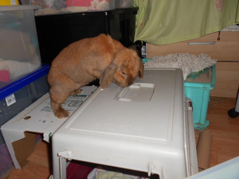 Kallie, lapine bélier née en 2008 - Page 4 Dscn2012