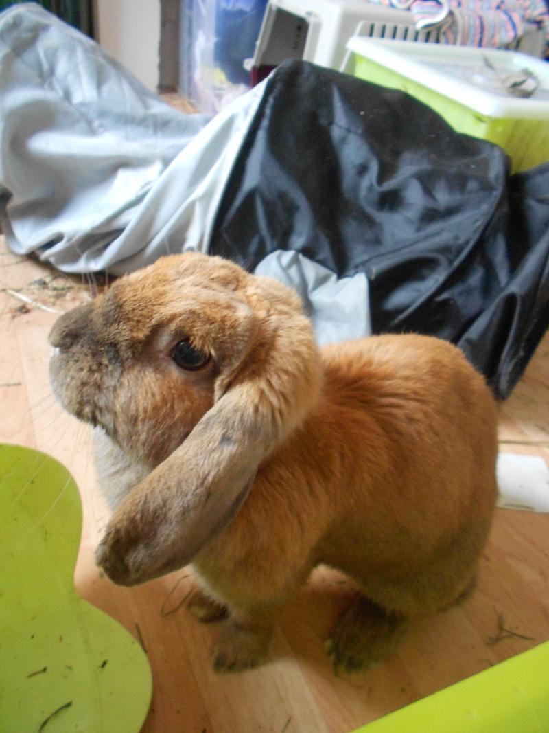 Kallie, lapine bélier née en 2008 - Page 4 Dscn2810