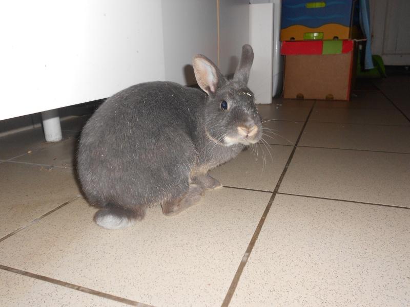 Gloupie, née en novembre 2010 - Page 4 Dscn3312
