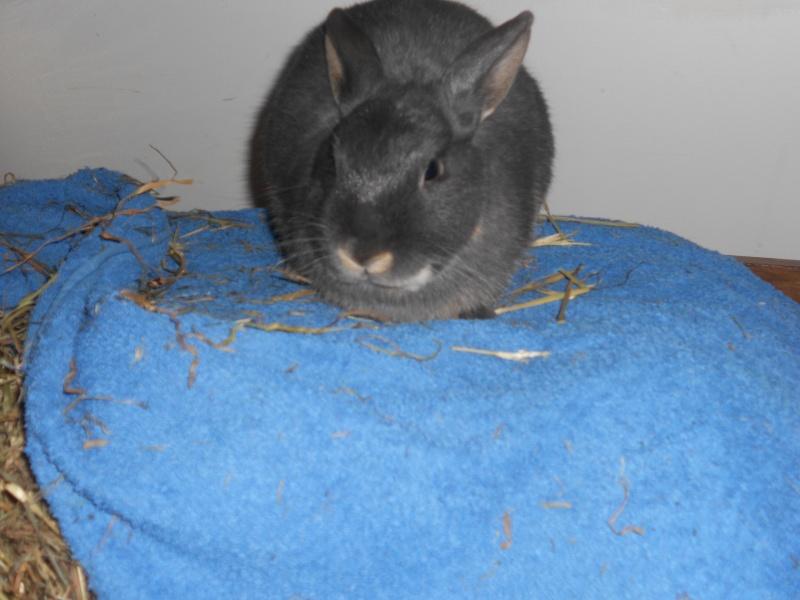 Gloupie, née en novembre 2010 - Page 4 Dscn3410