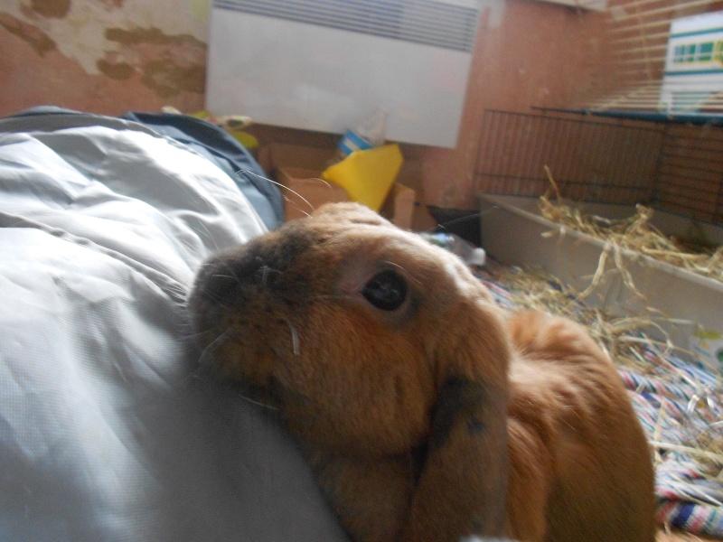 Kallie, lapine bélier née en 2008 - Page 5 Dscn3710