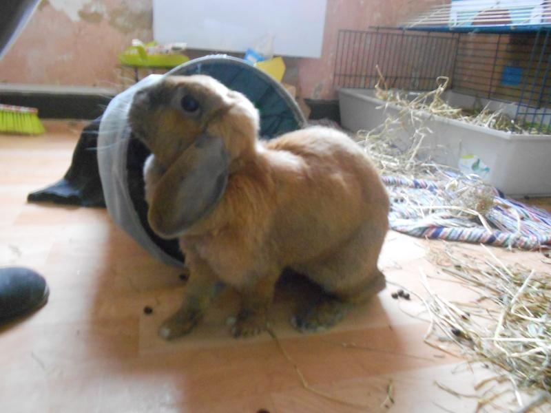 Kallie, lapine bélier née en 2008 - Page 5 Dscn3711