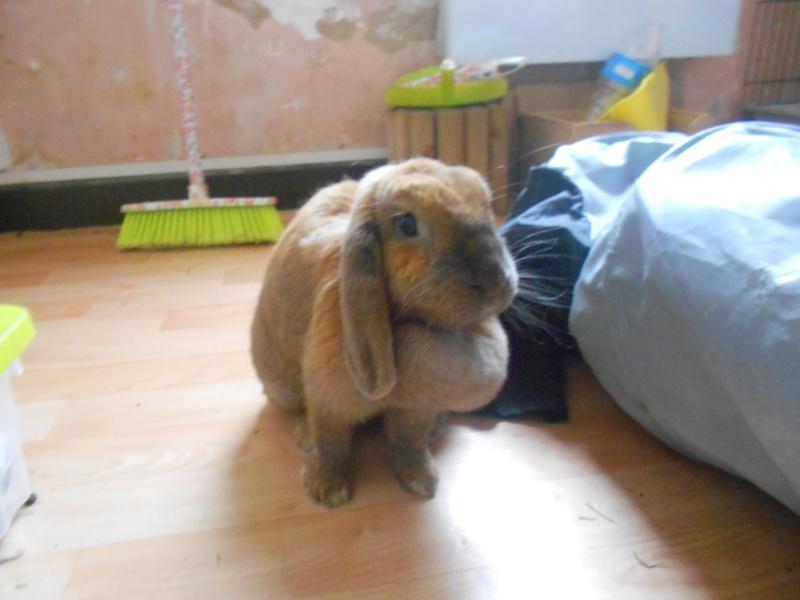 Kallie, lapine bélier née en 2008 - Page 5 Dscn3712