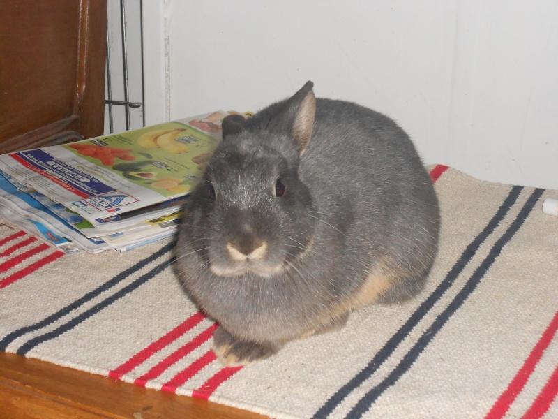 Gloupie, née en novembre 2010 - Page 4 Dscn3713