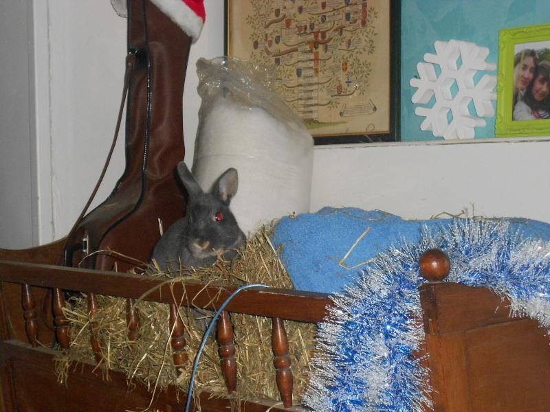 Gloupie, née en novembre 2010 - Page 4 Dscn3811