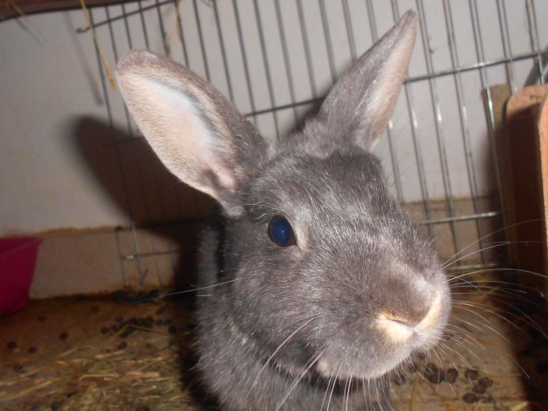 Gloupie, née en novembre 2010 - Page 4 Dscn3813