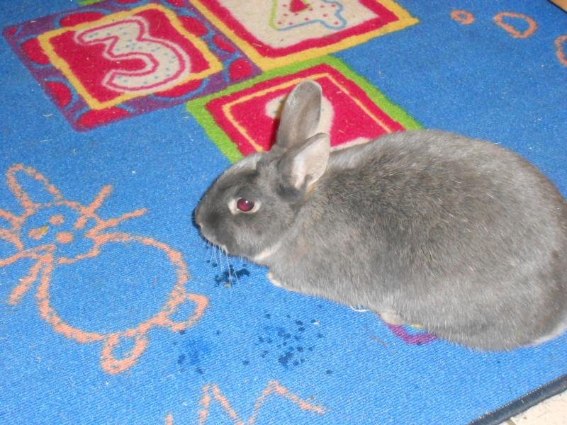 Gloupie, née en novembre 2010 - Page 4 Dscn3911