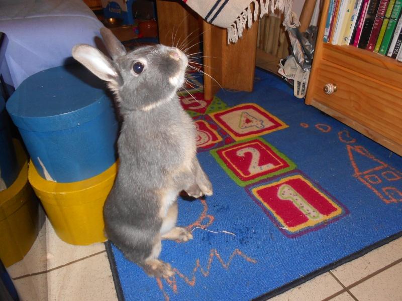 Gloupie, née en novembre 2010 - Page 4 Dscn3914