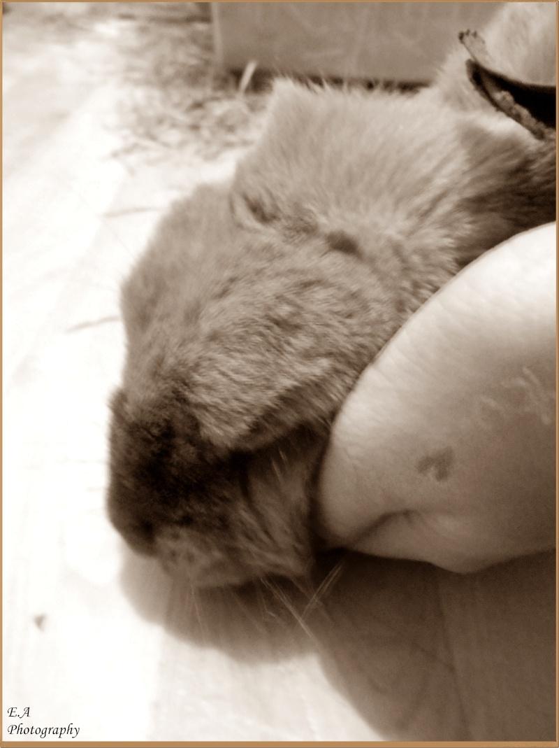 Kallie, lapine bélier née en 2008 - Page 5 Dscn4112