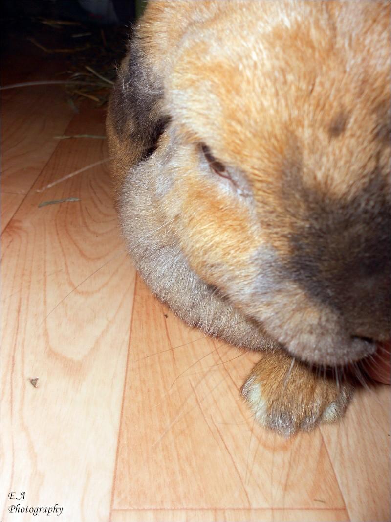 Kallie, lapine bélier née en 2008 - Page 5 Dscn4113