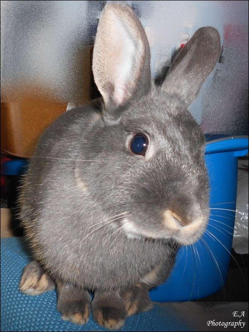 Gloupie, née en novembre 2010 - Page 4 Dscn4212