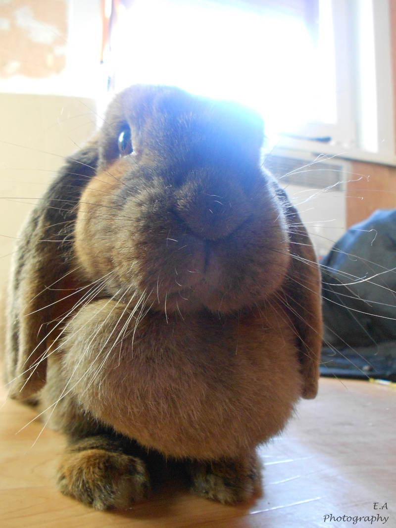 Kallie, lapine bélier née en 2008 - Page 5 Dscn4412