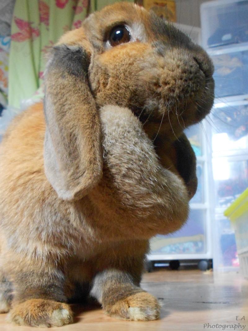 Kallie, lapine bélier née en 2008 - Page 5 Dscn4413