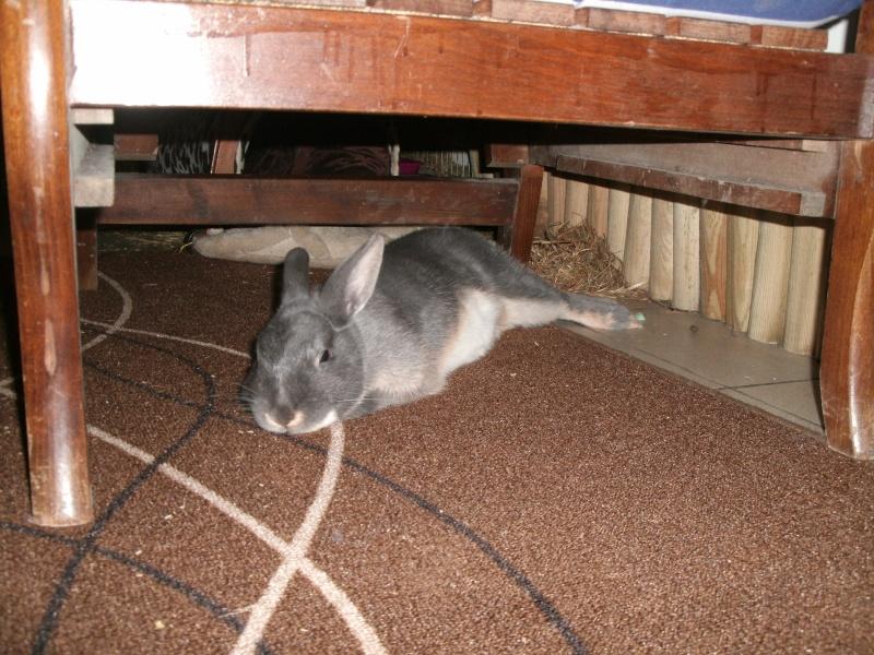 Gloupie, née en novembre 2010 - Page 8 Gedc0121
