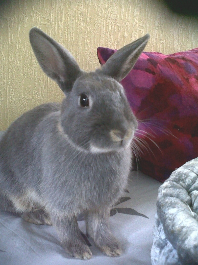 Gloupie, née en novembre 2010 - Page 2 Portra11