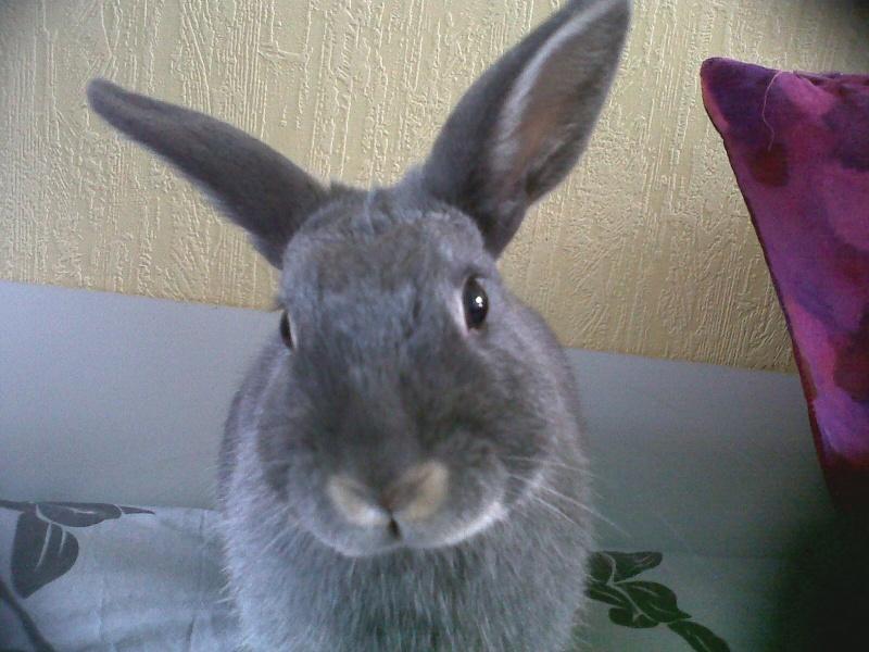 Gloupie, née en novembre 2010 - Page 2 Portra12