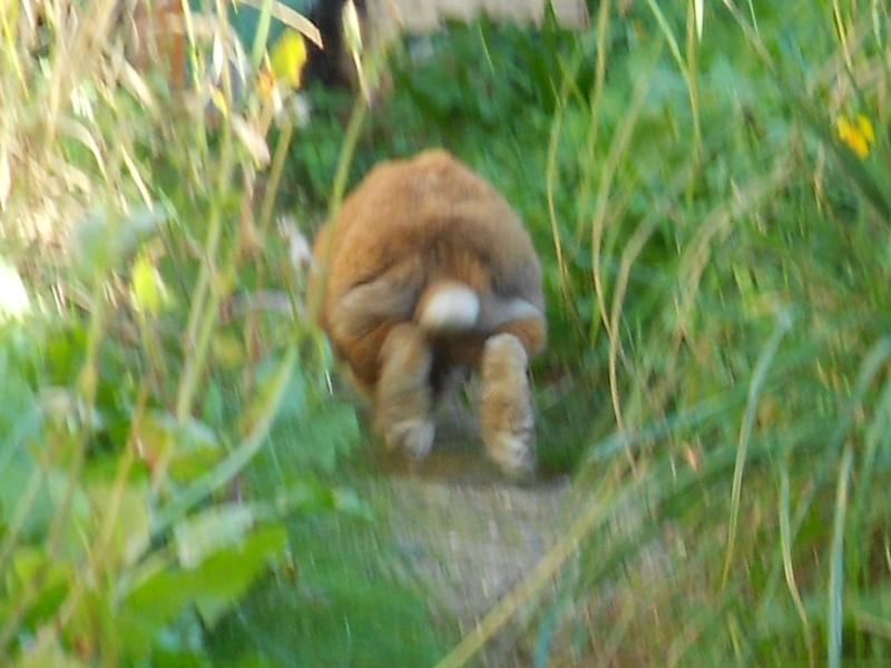 Kallie, lapine bélier née en 2008 - Page 2 Rscn0110