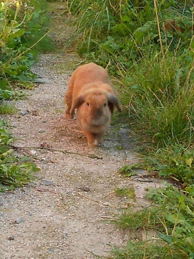 Kallie, lapine bélier née en 2008 - Page 2 Rscn0111