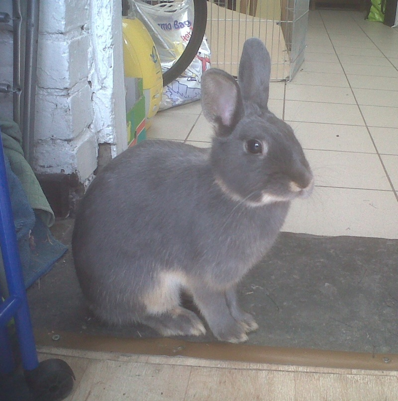 Gloupie, née en novembre 2010 - Page 2 Sur_la10