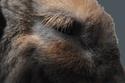 Kallie, lapine bélier née en 2008 - Page 5 Dscf4314
