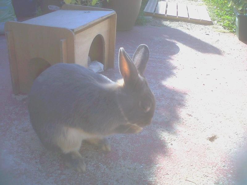 Gloupie, née en novembre 2010 - Page 2 Toilet10