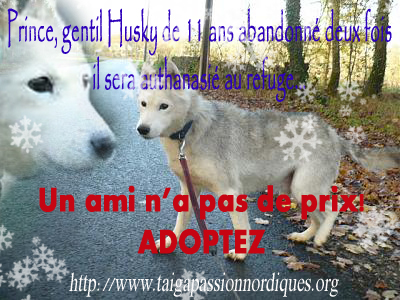 Prince  husky 11 ans ,au refuge depuis très longtemps 08 210